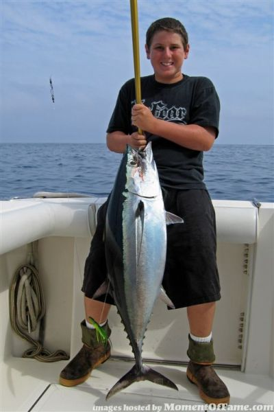 Local Albacore