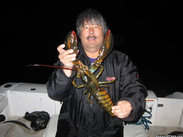 Maine Lobsters caught diving in California