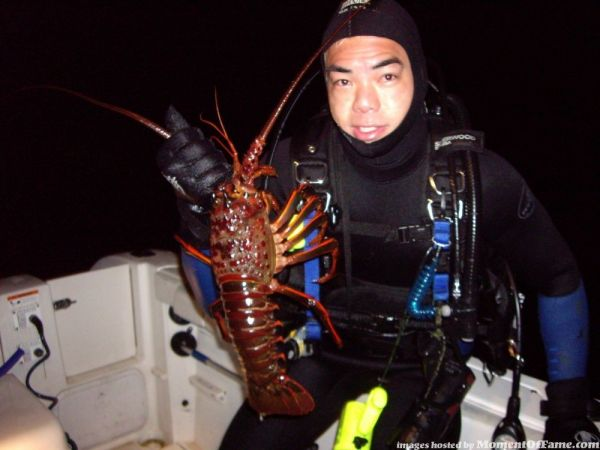 Lobster Diving Pictures