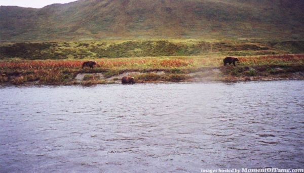 """Friendly"" bears on the Ayakulik"