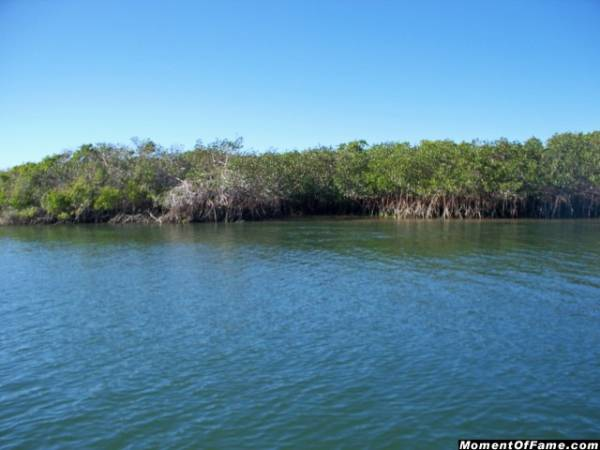 Mangroves-Mag Bay
