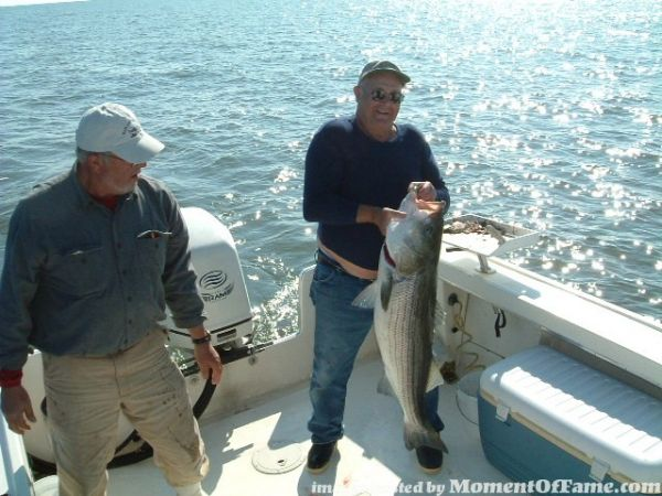 Inshore Stripers