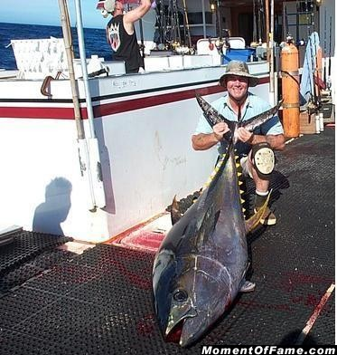 250_pound_yellowfin_adapted_
