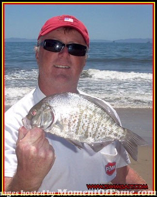 surfperch-schell-scott-060527-001